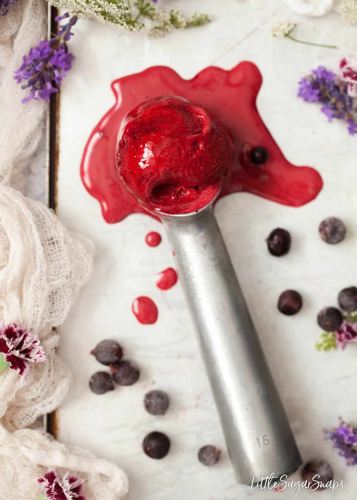 A scoop of blackcurrant sorbet that is melting on an old fashioned ice cream baller