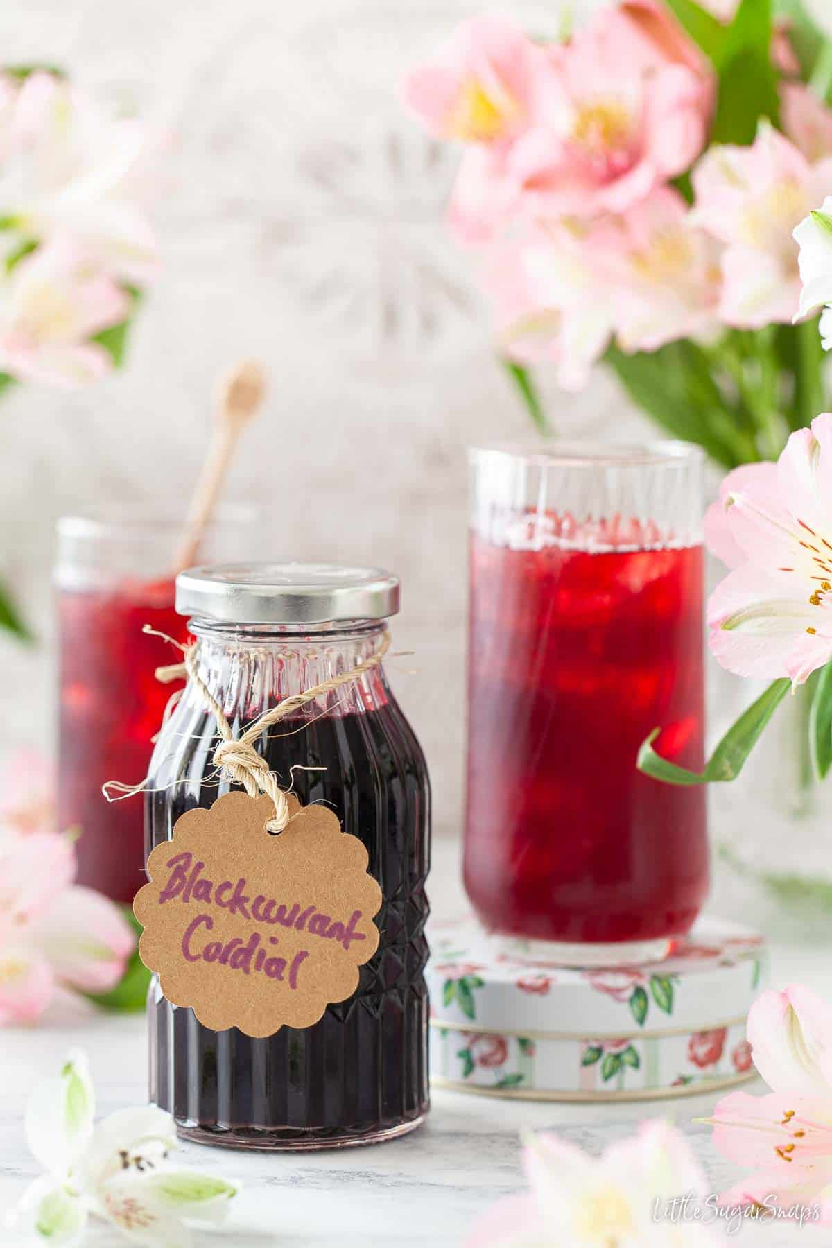 A bottle of blackcurrant cordial and drinks made from it in tall glasses