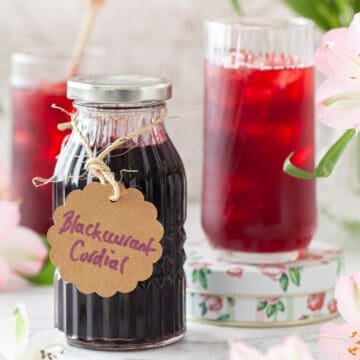 A bottle of blackcurrant cordial and a drink made from it